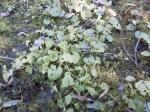 jardin_08_fev_10_violette.jpg