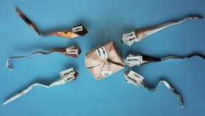 Ovule et six spermatozoïdes en origami