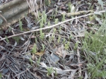 Apparition de plantes inconnues