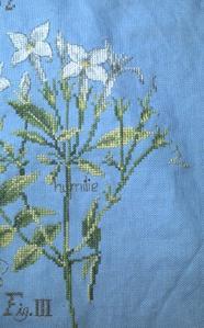 SAL étude de plantes, le jasmin, cinquième étape