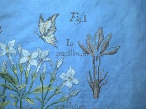 Les fleurs de jasmin et le papillon