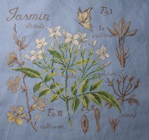 Le jasmin du SAL étude de plantes terminé