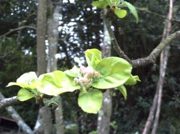 Mon jardin lundi dernier le blog de v ronique d - Le jardin des fleurs poitiers ...