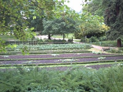 Serre botanique le blog de v ronique d for Jardin universitaire