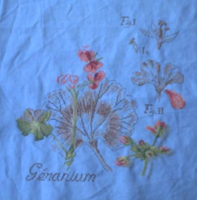 Les quatre premières étapes du SAL étude de plante 2, le géranium