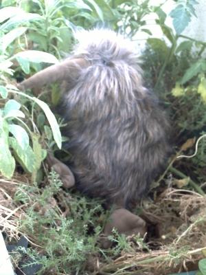 Un kiwi sur mon balcon