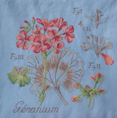 SAL étude de plantes, le géranium terminé