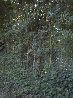 Les grosses branches sur la clôture