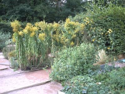 Chaumont, festival des jardins 2009, jardin 13, la halte des teinturiers