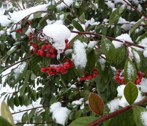 Poitiers sous la neige, le 20 décembre 2009 au matin : un garde-mager pour les oiseaux