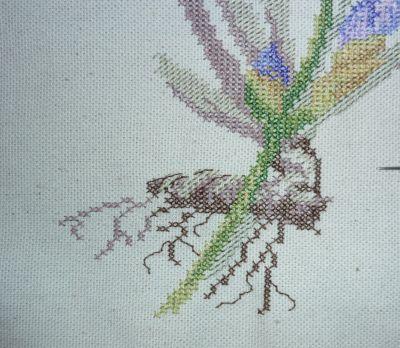 SAL iris, mon avancée à fin janvier : les racines