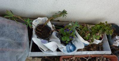 Les plantes offertes par Jardin Zen
