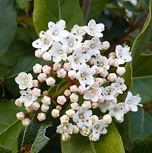 Parc de Blossac le 3 avril 2010, une fleur blanche