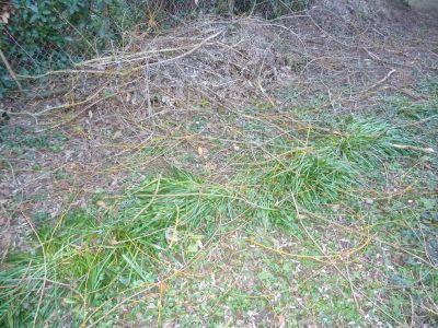 Mon jardin le 7 mars 2009, les branches après la tempête