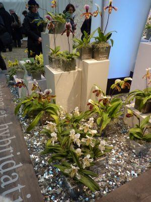 Paris, l'orangerie du Sénat, février 2010, exposition d'orchidées