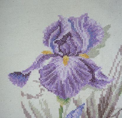 SAL iris, mon avancée en avril, la fin de la grande fleur