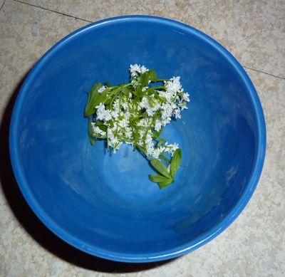 Mon jardin le 28 avril 2010, récolte d'aspérule