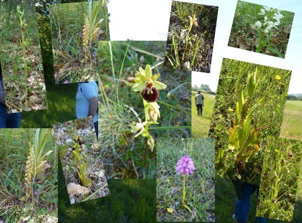 10 orchidées observées à Civaux le 23 mai 2010