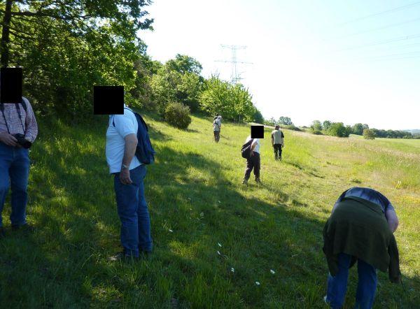 Civaux, Vienne, à la recherche des orchidées sur le coteau