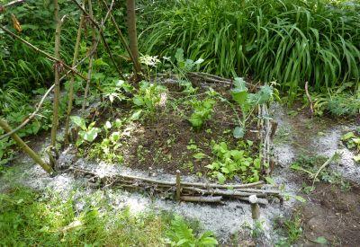 Mon jardin le 12 juin 2010, mon carré entouré de cendres