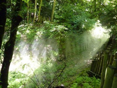 Chaumont-sur-Loire, le festival des jardins 2010, le vallon des brumes, brumisation en cours