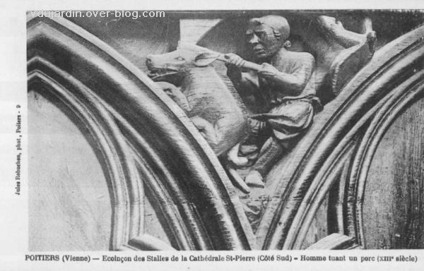 Poitiers, les stalles sud de la cathédrale, écoinçon 8, la tuerie du cochon, carte postale ancienne