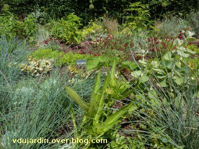 Chaumont-sur-Loire, festival 2010, le jardin 17, vue 4, des plantes