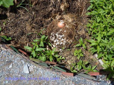 Chaumont-sur-Loire, festival 2010, le jardin 20, 12, les escargots