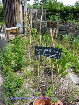 Chaumont-sur-Loire, festival 2010, le jardin 20, 13, les haricots