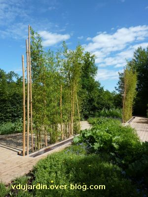 Chaumont-sur-Loire, festival 2010, le jardin 4, 2, les bambous