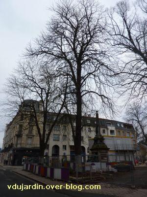 Poitiers, février 2011, VBD auprès de mon arbre, 1, square de la République