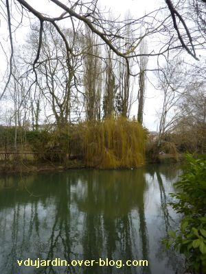 Poitiers, février 2011, VBD auprès de mon arbre, 3, au bord du Clain