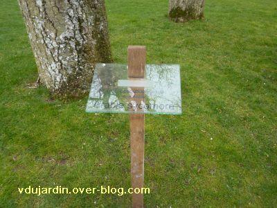 Poitiers, 12-15 mars, 4, jardin des plantes, nids de corneilles, étiquette d'un érable