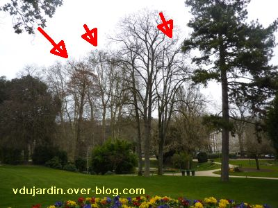 Poitiers, 12-15 mars, 6, jardin des plantes, nids de corneilles