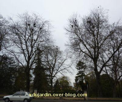 Poitiers, 12-15 mars, 7, jardin des plantes, nids de corneilles