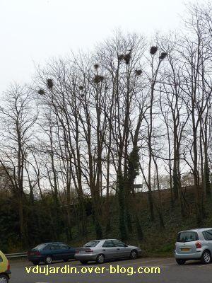 Poitiers, 12-15 mars, 8, face au jardin des plantes, nids