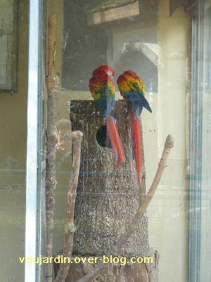 Poitiers, 26 février 2011, défi APN, des nids, 06, aras à Blossac