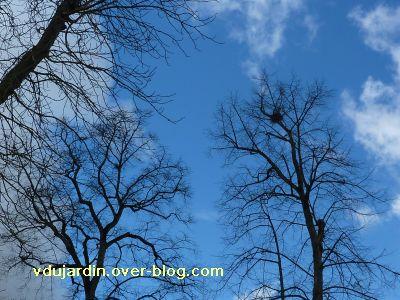 Poitiers, 26 février 2011, défi APN, des nids, 09, pies à Blossac