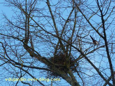 Poitiers, 26 février 2011, défi APN, des nids, 10, pies à Blossac
