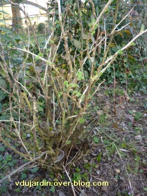 Un p tit tour au jardin le blog de v ronique d - Au jardin de mon pere les lilas sont fleuris ...