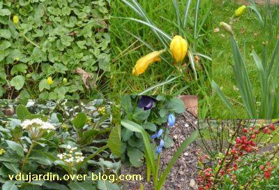 Printemps 2011, 1, boutons de fleur