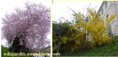 Printemps 2011, 4, arbres en fleur