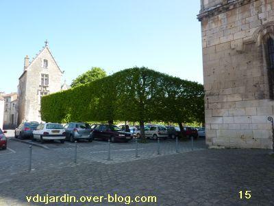 Poitiers, 8 avril 2011, des haies, 15, les arbres place de la Cathédrale