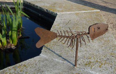 Poisson au bord d'un bassin à Cahors