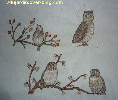 Concours oiseau, étape 4, deux chouettes, un hibou et un oiseau