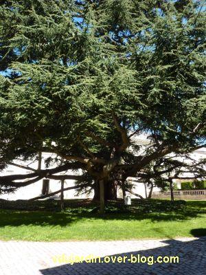 Tours, le musée des Beaux-Arts, les branches du cèdre étayées