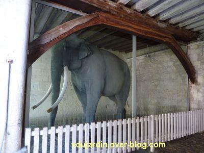 Tours, le musée des Beaux-Arts, l'éléphant Fritz