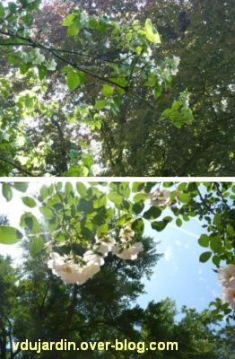 D fi photo le ciel par dessous les fleurs ou les arbres fleuris le blog de v ronique d - Le jardin des fleurs poitiers ...