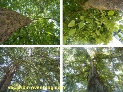 20 mai 2011, des arbres par dessous, Poitiers, vue 3