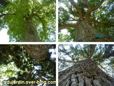 20 mai 2011, des arbres par dessous, Poitiers, vue 4